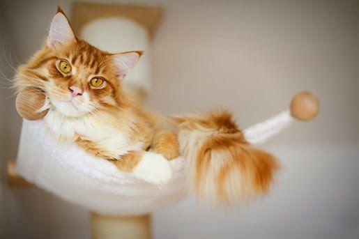 #Karmy #Brit Care dla kotów w nowej odsłonie