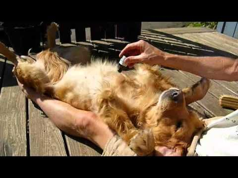Natural Flea and Tick Repellent for Dogs & Cats....using cedarwood & orange oil.  Non-toxic & safe alternative to Frontline Plus and other poisonous flea & tick 'remedies'.  (Disclaimer: the guy in the video seems a bit creepy, but I'm going to try this.)