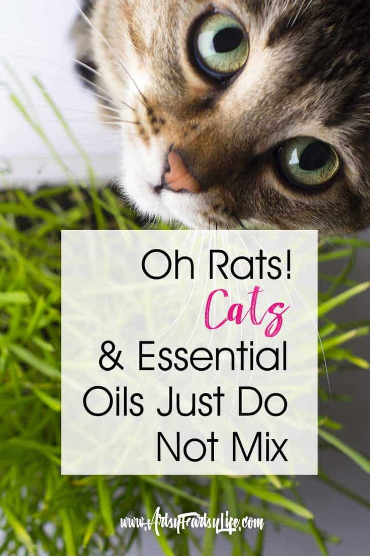 Warning! Essential Oil Diffusers Are Harmful To Cats