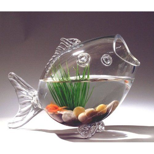 1000 ideas about betta fish bowl on pinterest aquatic for Glass fish bowl