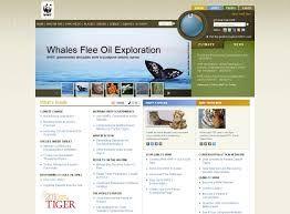 Bildresultat för web design & development india jane