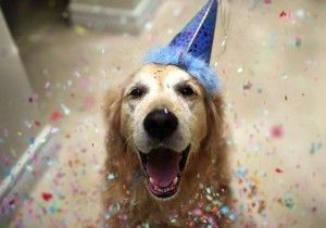 Throw your four-legged friend the best birthday with a trip to The Cosmopolitan. Book now: http://www.cosmopolitanlasvegas.com/stay/rooms-and-suites.aspx?utm_medium=social&utm_source=pinterest #petfriendly