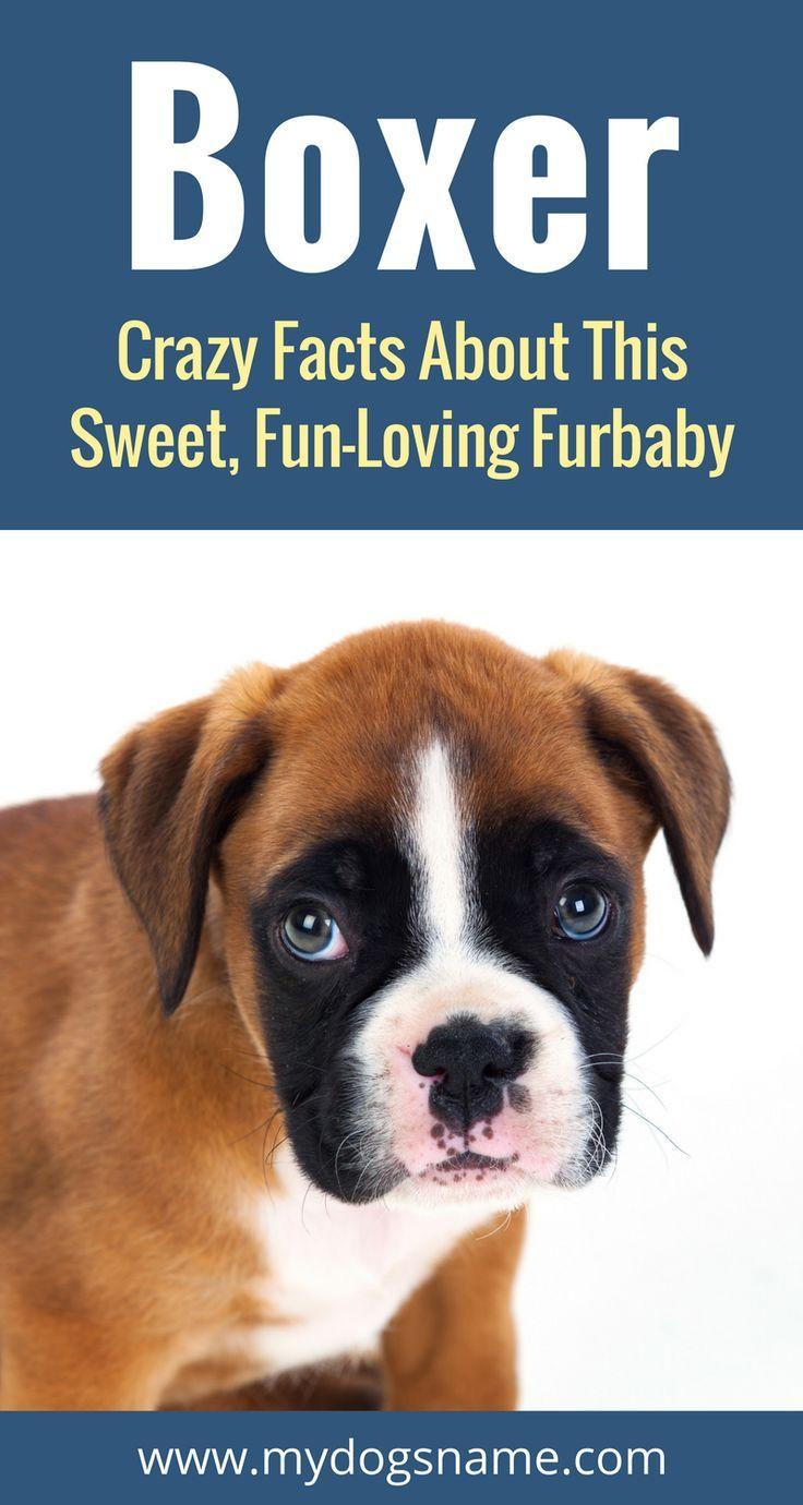 7695 besten Dog Pictures Bilder auf Pinterest