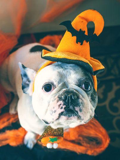 Halloween chegando aí e tem muita gente pensando em fantasias bem assustadoras para curtir as festas deste ano. Mas enquanto os humanos se fantasiam para assustar, os animais são fantasiados para a gente se apaixonar! Impossível não morrer de amores ao ver um bichinho em qualquer uma dessas fantasias - e, se você tem um pet, vai querer fantasiá-lo também!