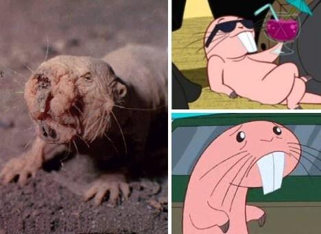 Rufus the naked mole rat