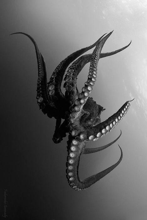 Predators and Preys: octopus