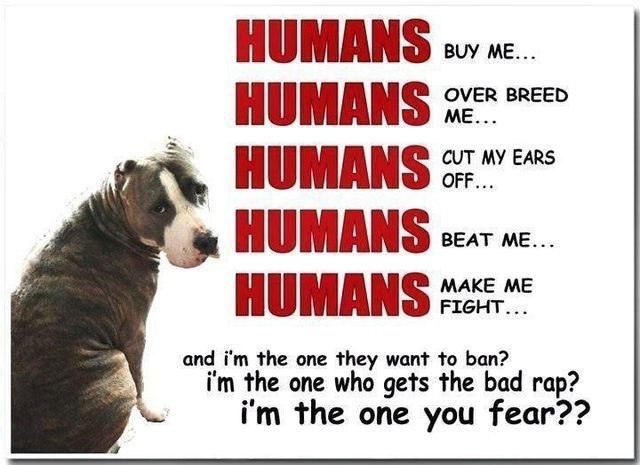 Report animal abuse right away!!!! DO NOT stand by and let it happen!!!