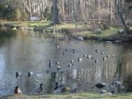 The duck pond, Miller Place, NY... loved running by there & kids ice skating there too!