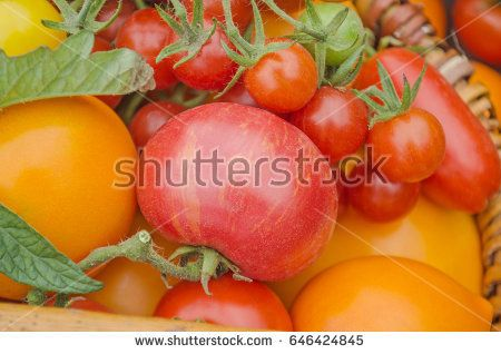 Colorful tomatoes on vintage wooden background.  Cherry, gourmet and grape red and yellow tomatoes