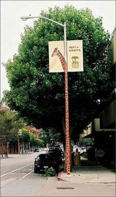 calgary zoo street marketing