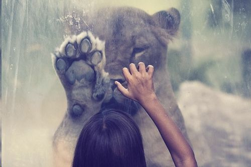 <3: Picture, Lion, High Five, Big Cats, Girls Generation, Hands, The Zoos, Photography, Animal