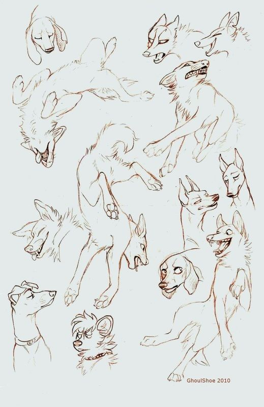 wolf front poses - 519×800