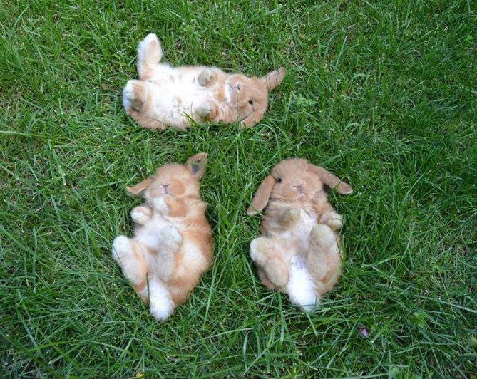 bunny friends looking at the sky together