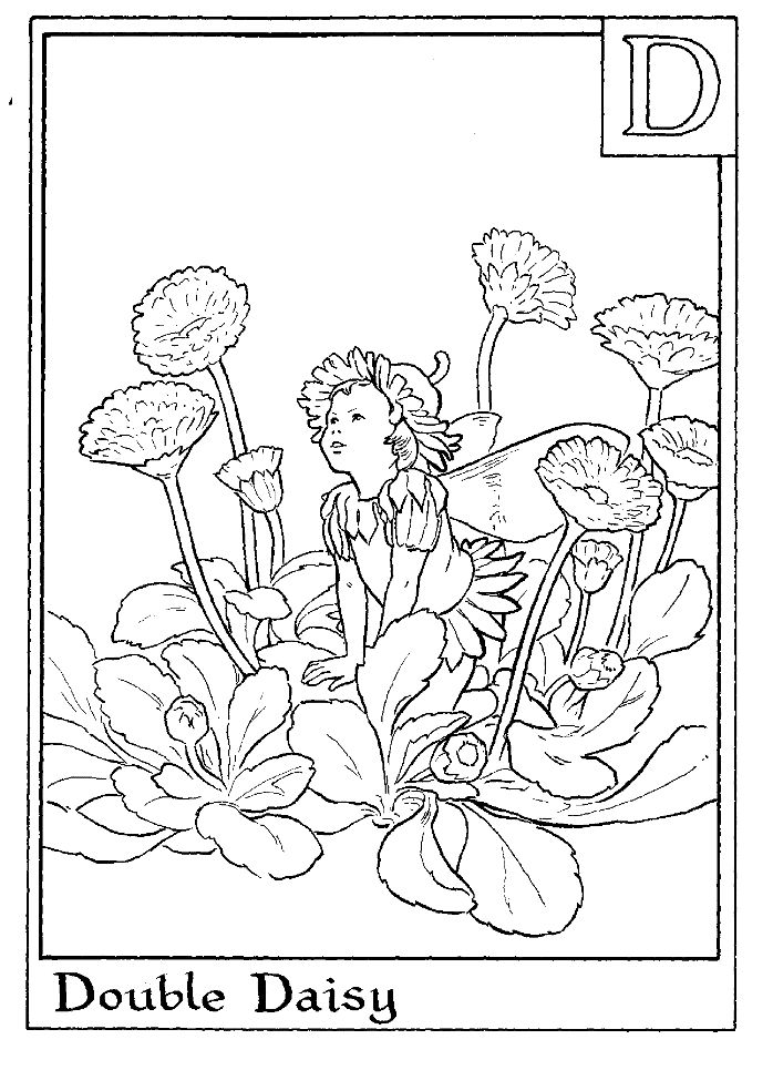 Letter D For Double Daisy Flower Fairy Coloring Page