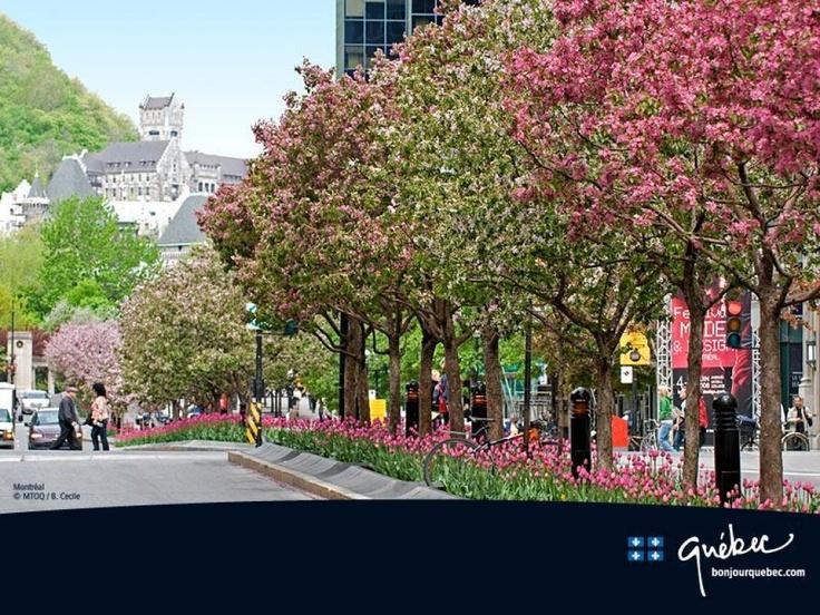 Montréal, McGill