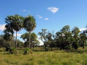 All about Paraguay for Kids - Image of Chaco Boreal in Paraguay