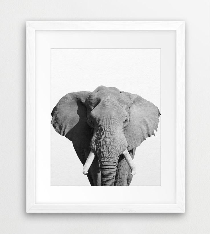 Elephant Print African Safari Wall Art Elephant Photo