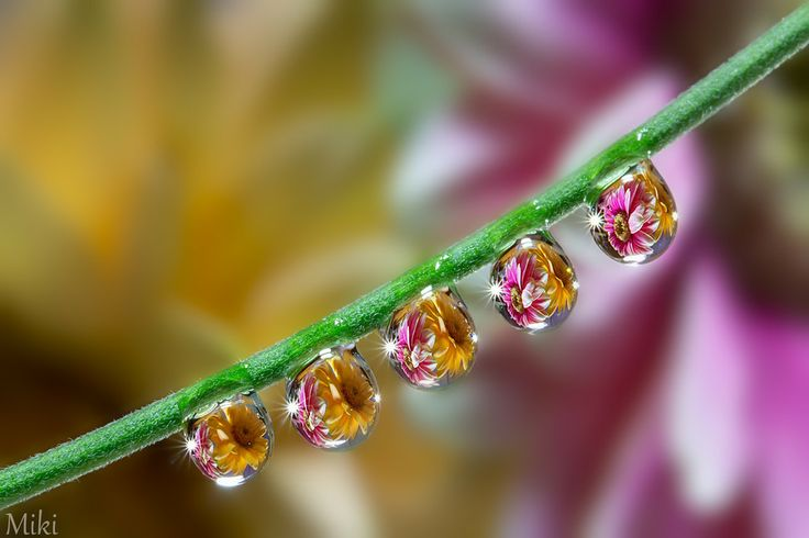 Water angels by Miki Asai on 500px