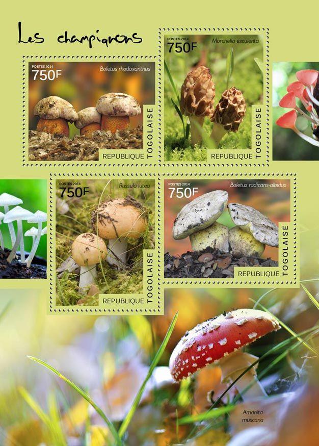 TG 14518 aMushrooms  (Boletus rhodoxanthus, Morchella esculenta, Russula lutea, Boletus radicans-albidus, Amanita muscaria)