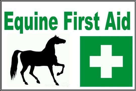 Equine First Aid Course  Aims:	To enable learners to be able to deal with equine first aid situations more confidently Contents:	Various types of bandaging, poulticing, wound management, treatment of shock, common diseases in horses, signs of good and bad health, lameness recognition Real horses used for demonstrations.