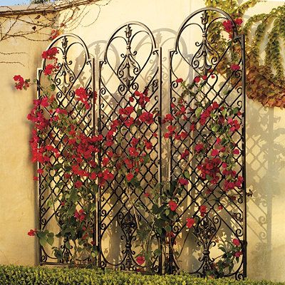 Spanish style iron wall arbor with bouganvilla, this could also be done with Clematis or Thumbergia
