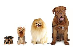 Insurance for pet daycare services include dog daycare, cat daycare, indoor/outdoor play areas, runs & suites, playgroups, facility or owner supplied food & treats, dog walking for exercise & washroom breaks and merchandise retailing.