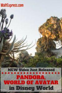 New Video: from Animal Kingdom's Pandora: World of Avatar at Disney World