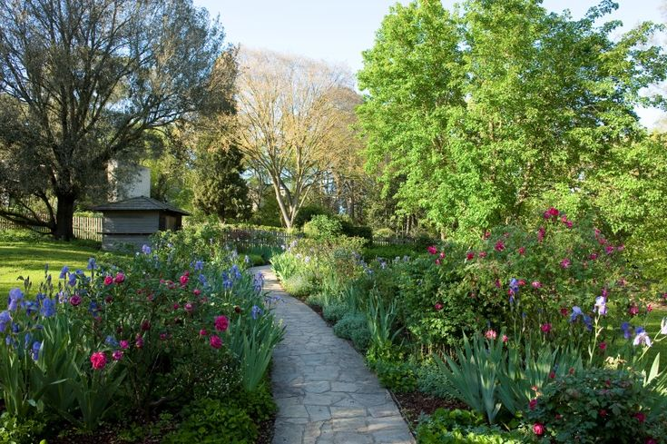 Sunday's garden at Heide - pink roses & iris