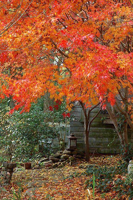 1000+ Images About Garden Windbreak Ideas On Pinterest