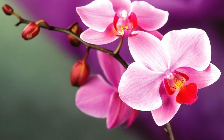 Curatarea si schimbarea substratului orhideelor