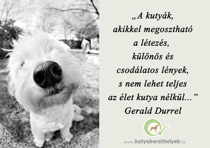 """""""A kutyák, akikkel megosztható a létezés, különös és csodálatos lények, s nem lehet teljes az élet kutya nélkül..."""" Durrell, Gerald  #kutya #idézet #quotes #dog #kutyabaráthelyek #kutyásidézet"""