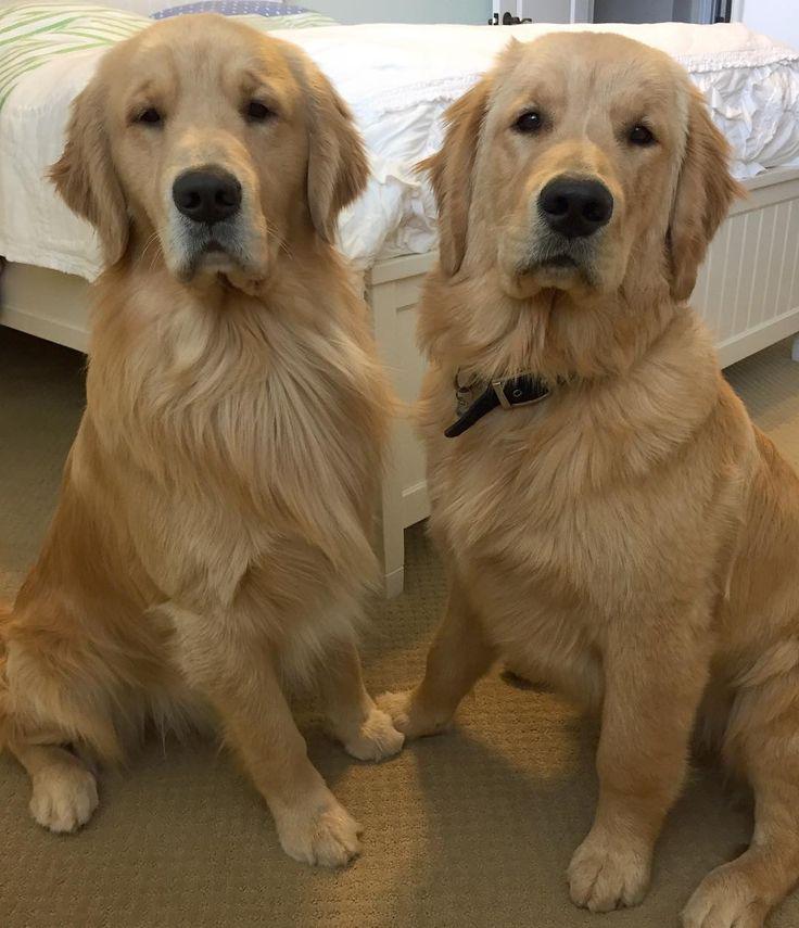 Beau and Bear ❤
