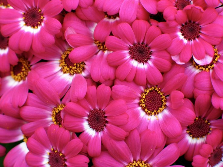 Blossoms - Desktop Background Pictures: http://wallpapic.com/nature/blossoms/wallpaper-10940