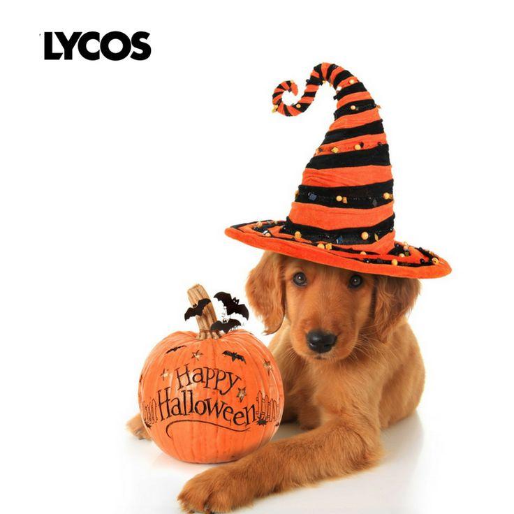 Happy Halloween! #HappyHalloween #HappyHalloween2017 #HappyHalloweenday #lycos #ybrant #lycoslife #Halloween