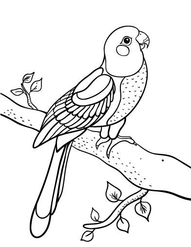 107 Best Parrot Coloring Pages Images On Pinterest