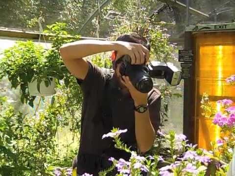 Macro Photography with Flash