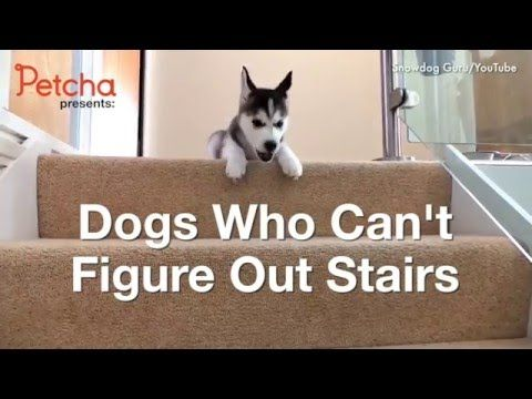 Dogs Vs. Stairs - YouTube