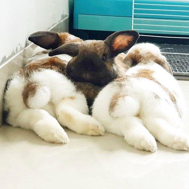 Get Bunnybutt