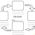 Life cycle templated to be used for a variety of different life cycles including Frogs
