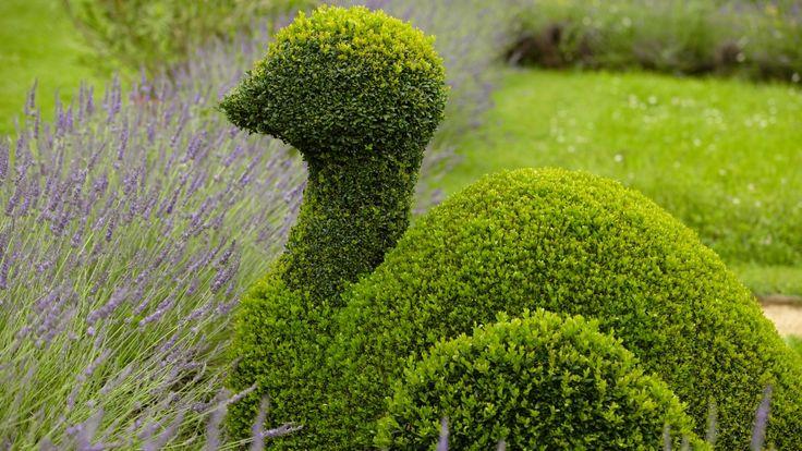 Buchsbaum schneiden: So gelingt der perfekte Formschnitt