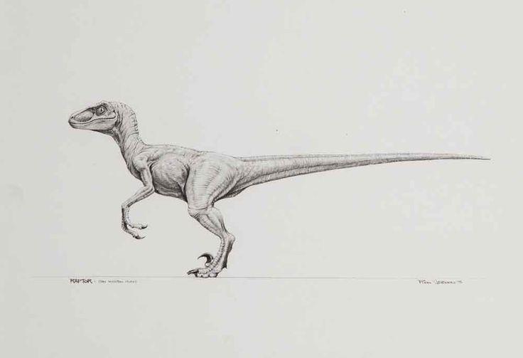 Jurassic Park Velociraptor. Next tattoo