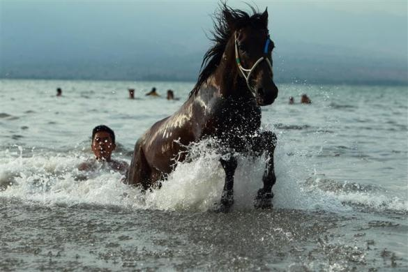 A child jockey exercises his horse at Kalaki beach, outside Bima, Indonesia, November 16, 2012.  REUTERS/Beawiharta