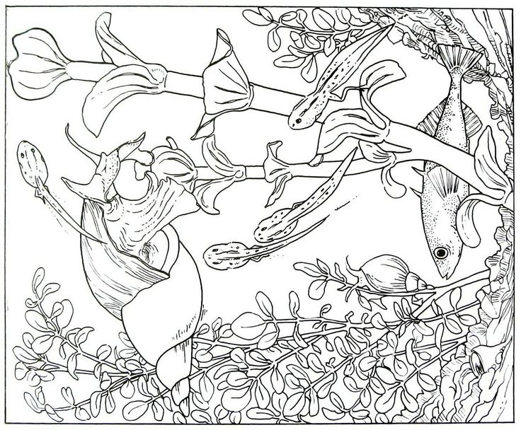 Underwater scene with fish and snail animal coloring book