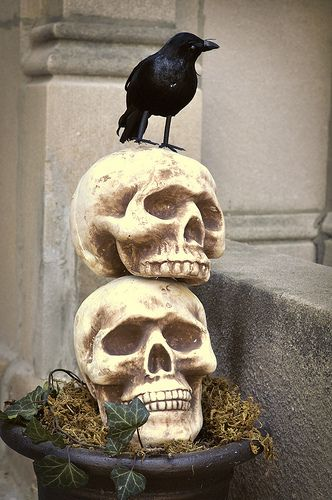 1371 best Halloween/Fall/Thanksgiving images on Pinterest - skull halloween decorations