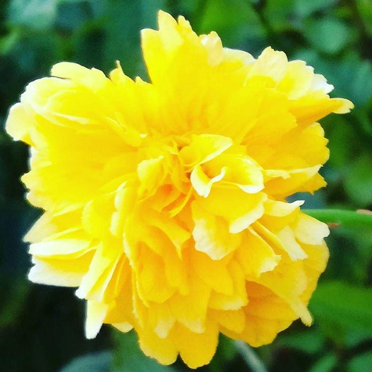 Kolejny piękny jesienny kwiat.  #dianapozytywnie
