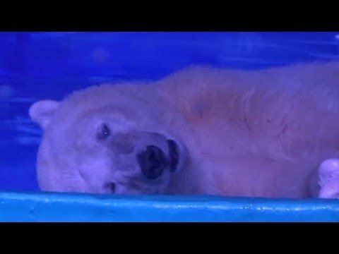 Help Free Depressed Polar Bear Who Lives in a Glass Box so People Can Take Selfies (VIDEO) | One Green Planet