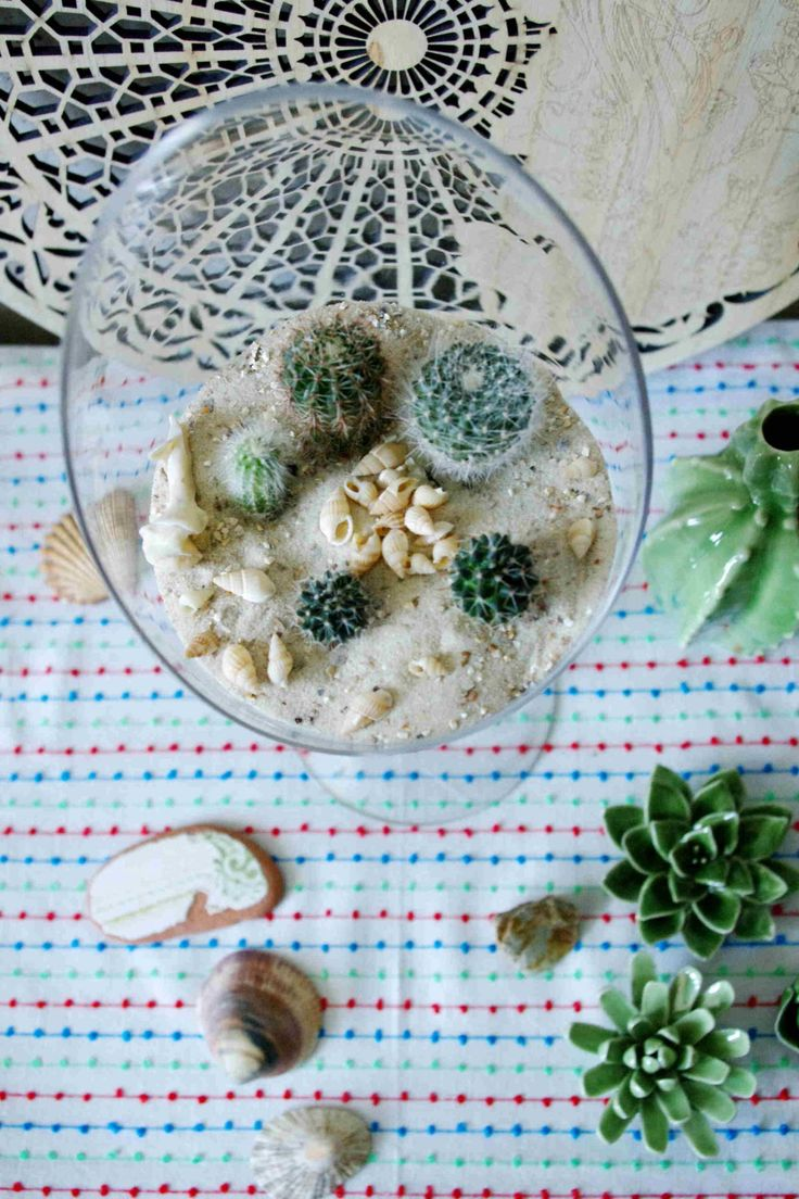 goblet terrarium with cacti – Idim in Berlin, make your own little miniature garden in this beautiful goblet and read the tips of how to grow cacti out of seeds. #diy #plants #cacti # Kaktus #planting #Terrarium #miniature #garden #Blumen #flowers #seeds