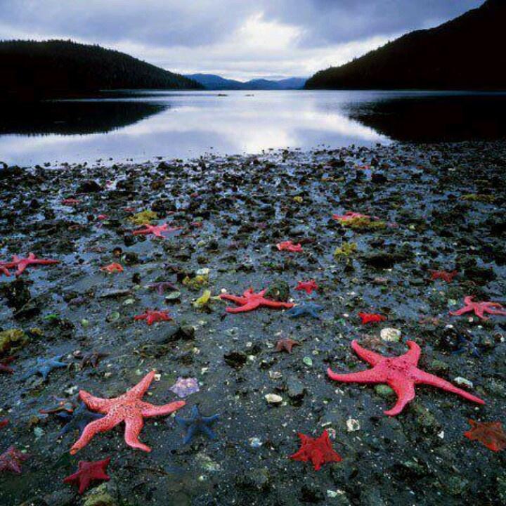 Starfish colony, West coast of NZ