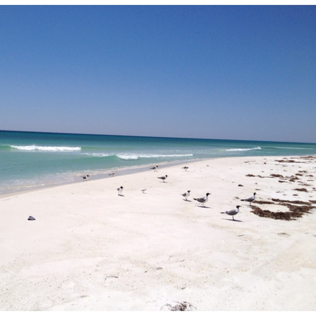 Perdido Key Hotels: 142 Best Perdido Key Images On Pinterest