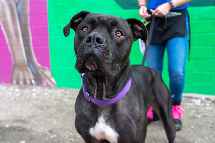Adopt percy on petfinder help homeless pets dog daycare